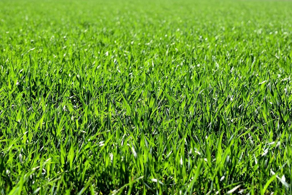 zdjęcie łąki
