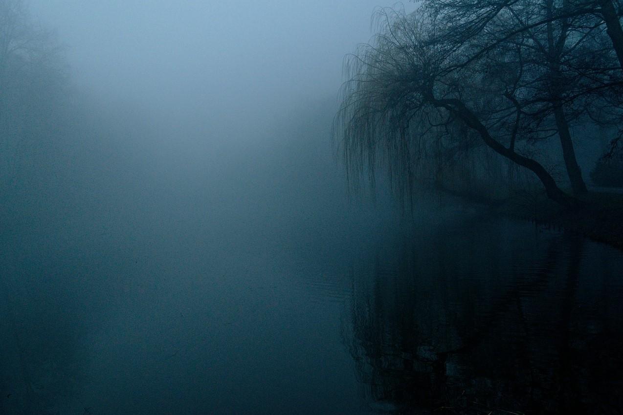 Zdjęcie przedstawia zamglony park