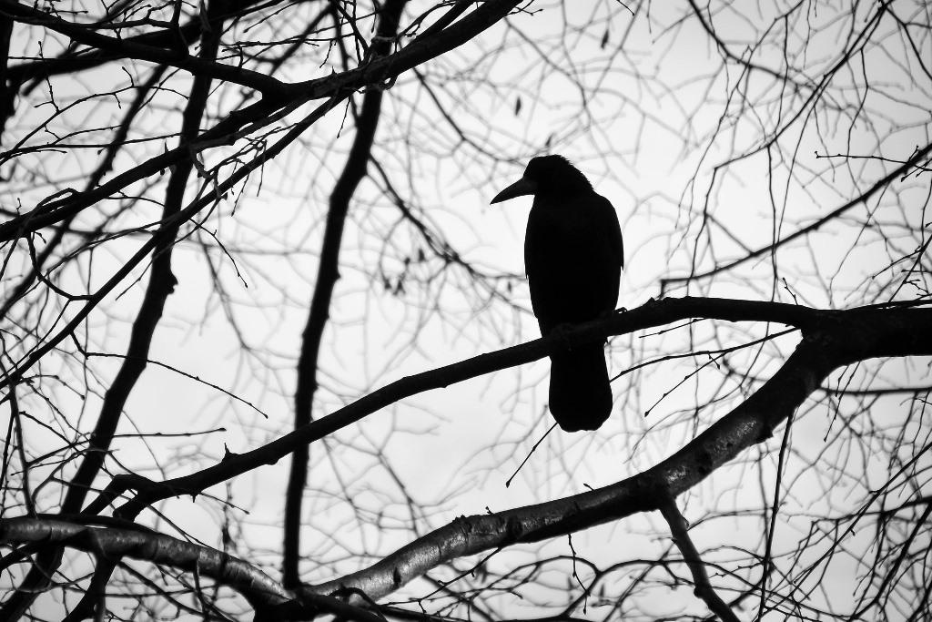 Czarny ptak na bezlistnym drzewie