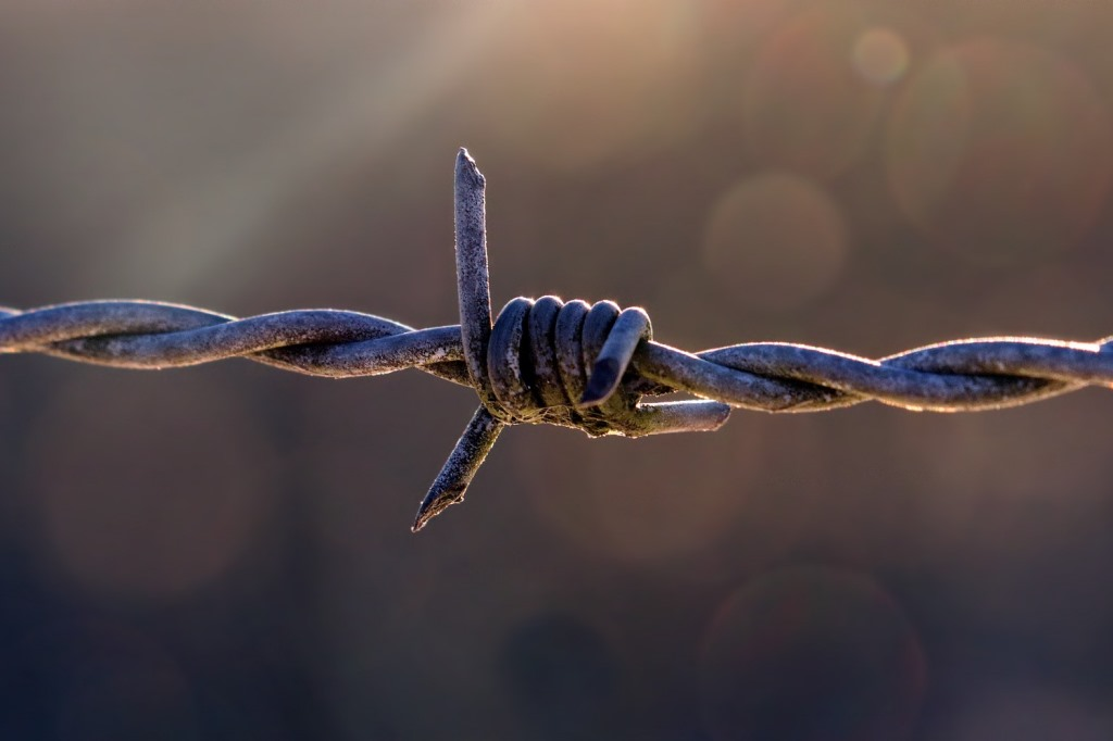 fragment drutu kolczatego
