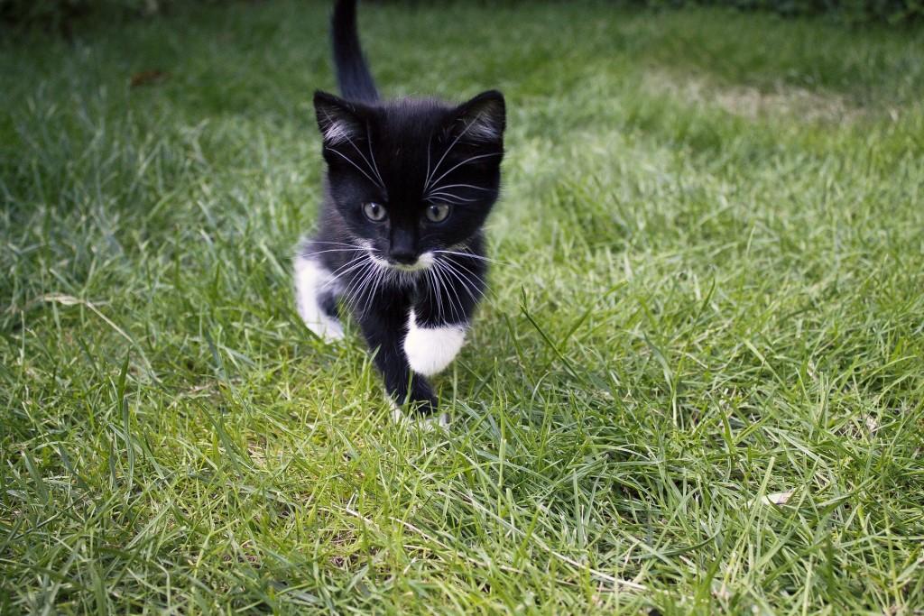 Mały kotek na trawie