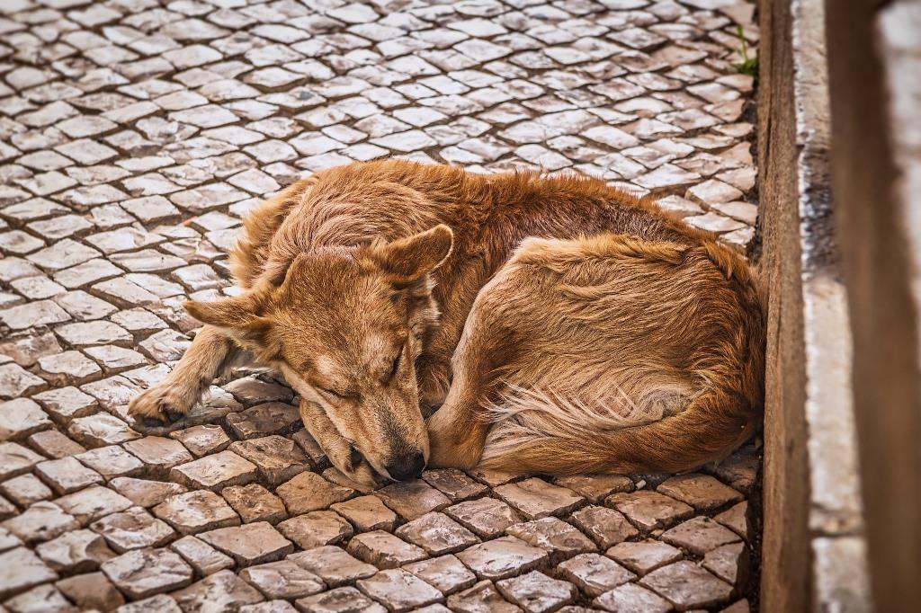 Pies śpiący na chodniku