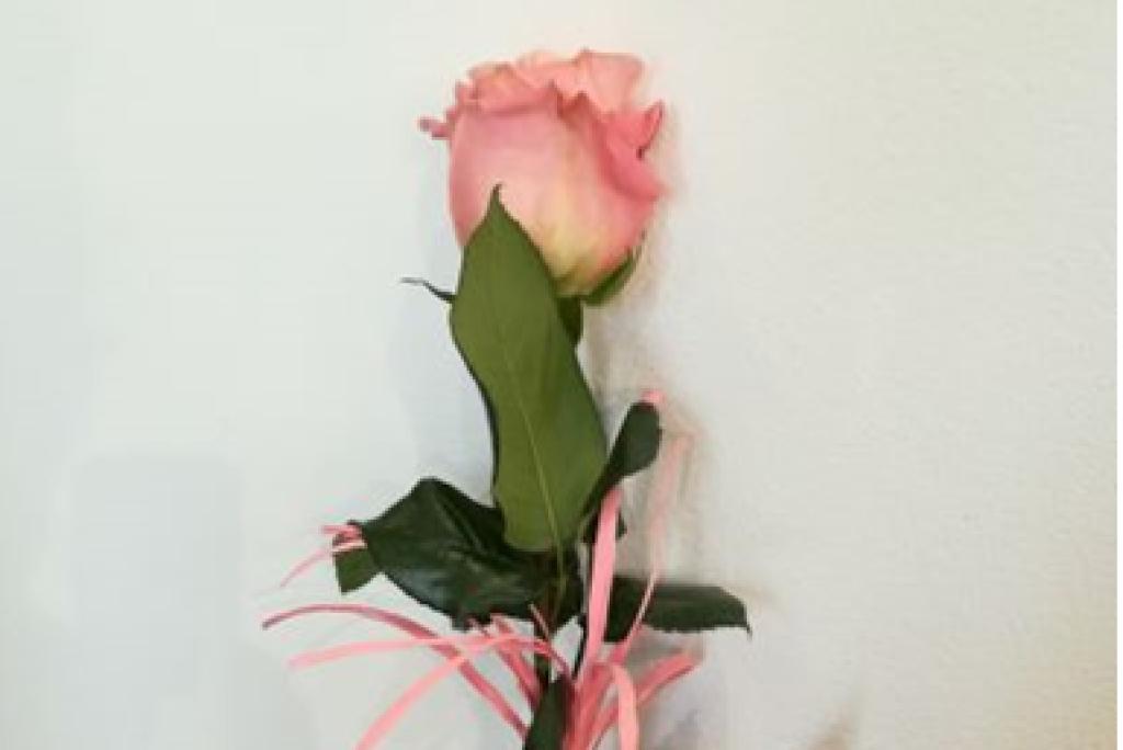 Róża z różową wstążeczką
