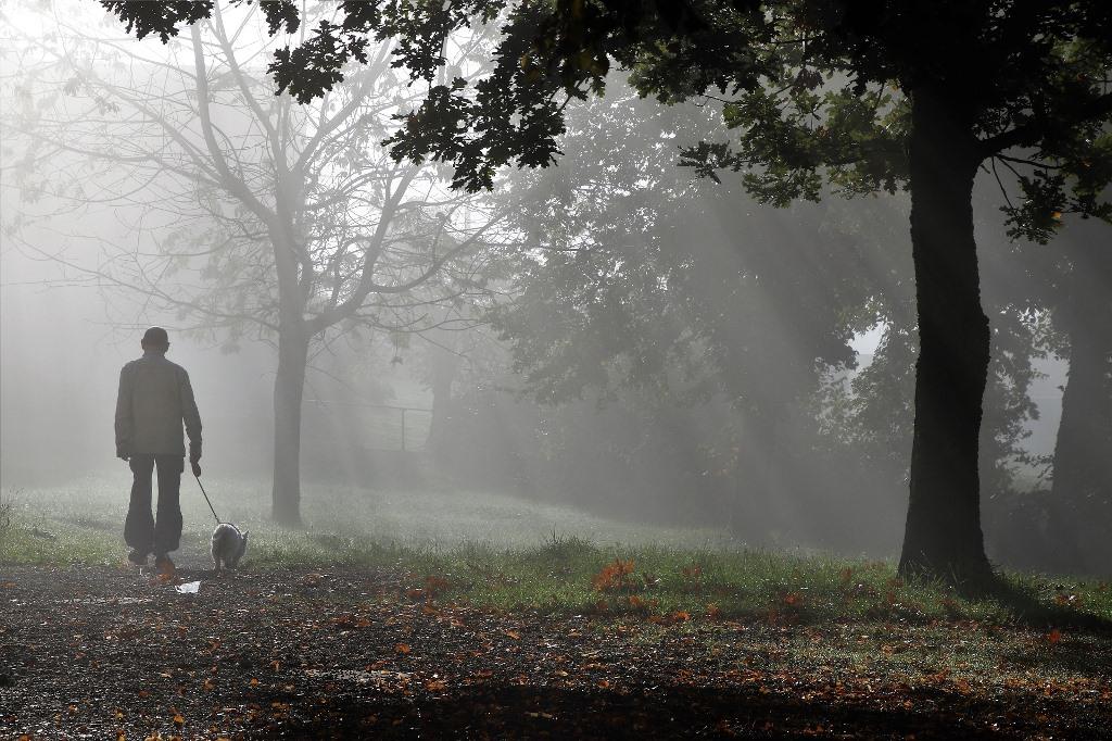 Senior w parku, słońce i mgła