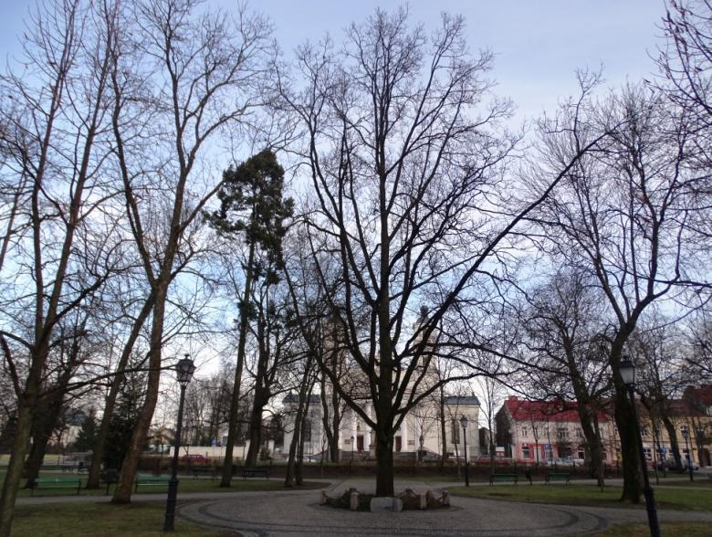 Drzewo przed kościołem