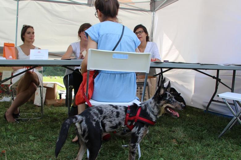 zdjęcie: na pierwszym planie widać psa, za nim na krześle siedzi jego właścicielka i rozmawia z trzema kobietami