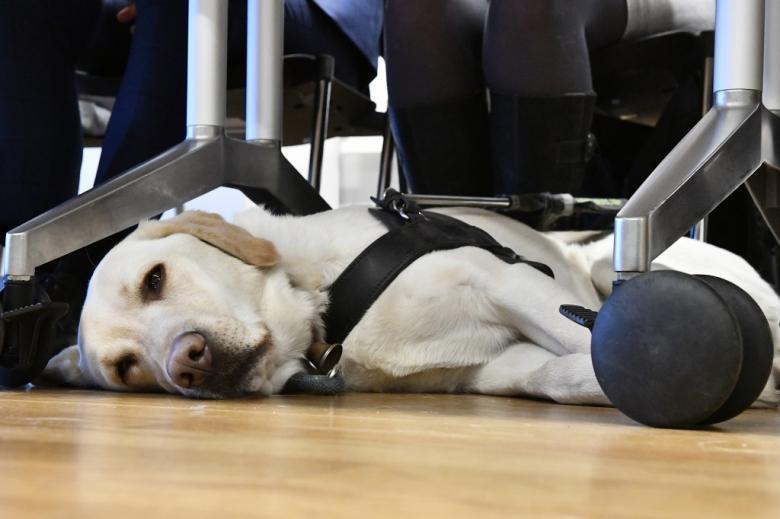 Pies asystujący odpoczywa