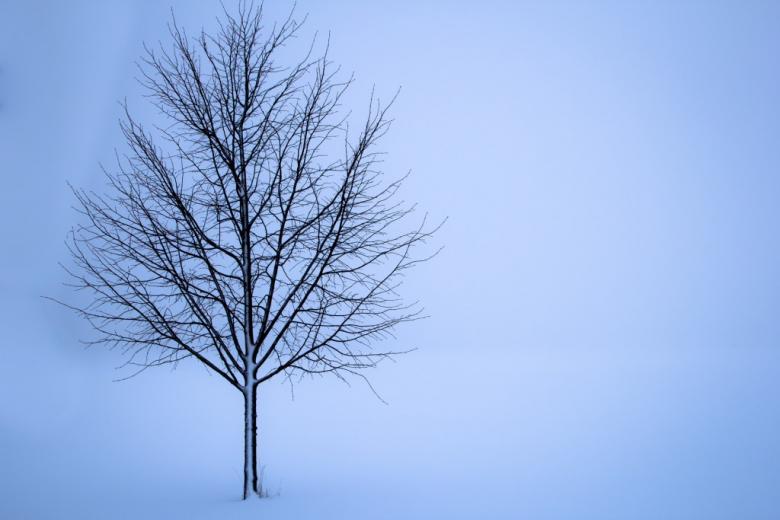 zdjęcie samotnego drzewa w zimie