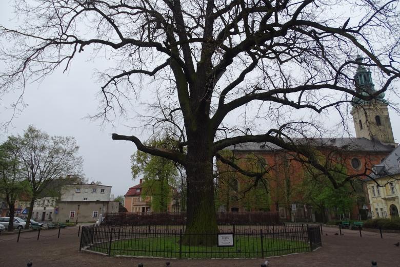 Wielkie drzewo na skwerze