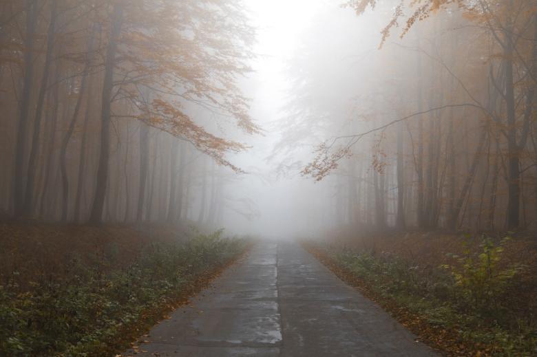 Droga przez las jesienią, we mgle