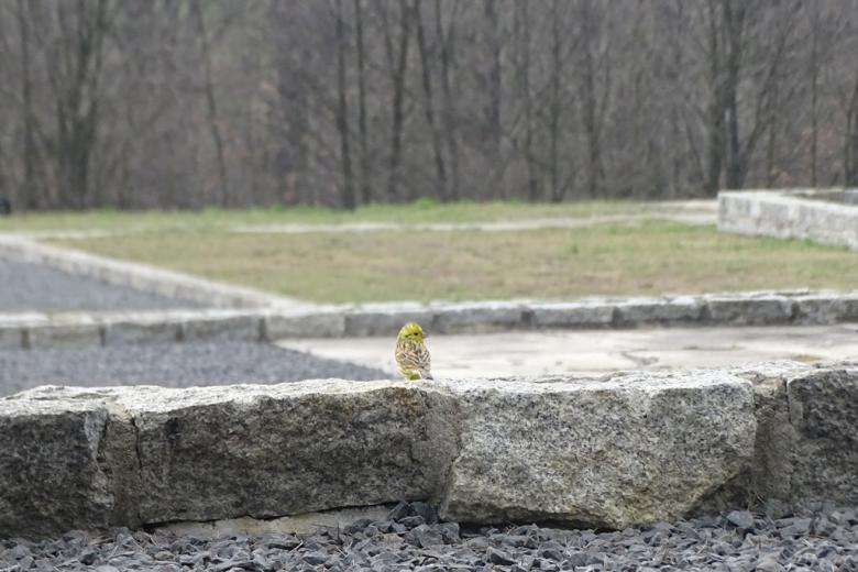 Żólty ptak na kamiennych fundamentach