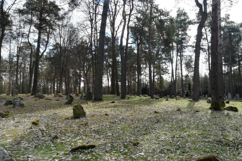 Kamienie zapadające się w ziemię wśród drzew