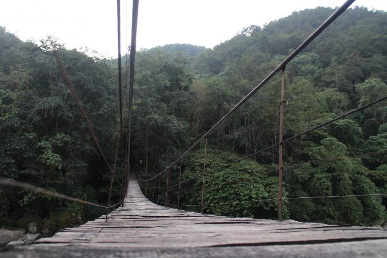 Wąski drewniany most wiszący nad doliną leśną