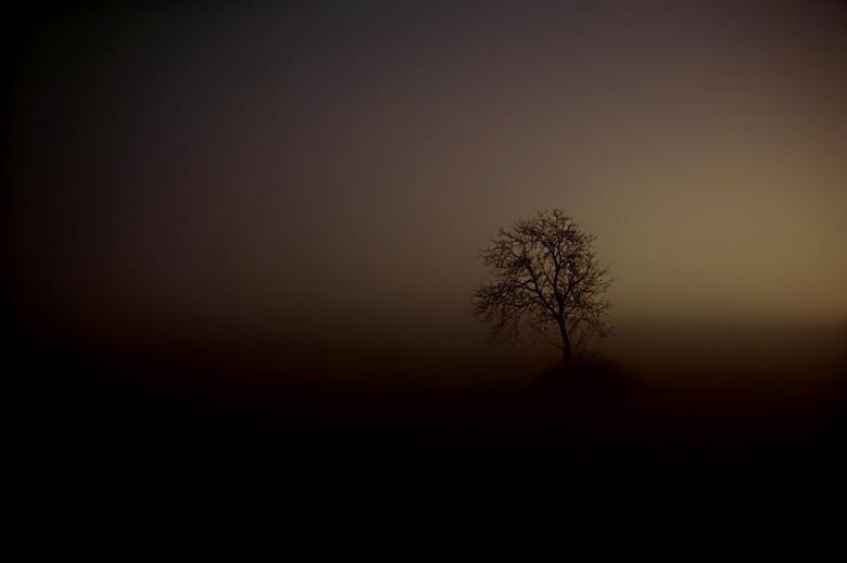 Drzewo w bardzo ciemnej, brązowej mgle