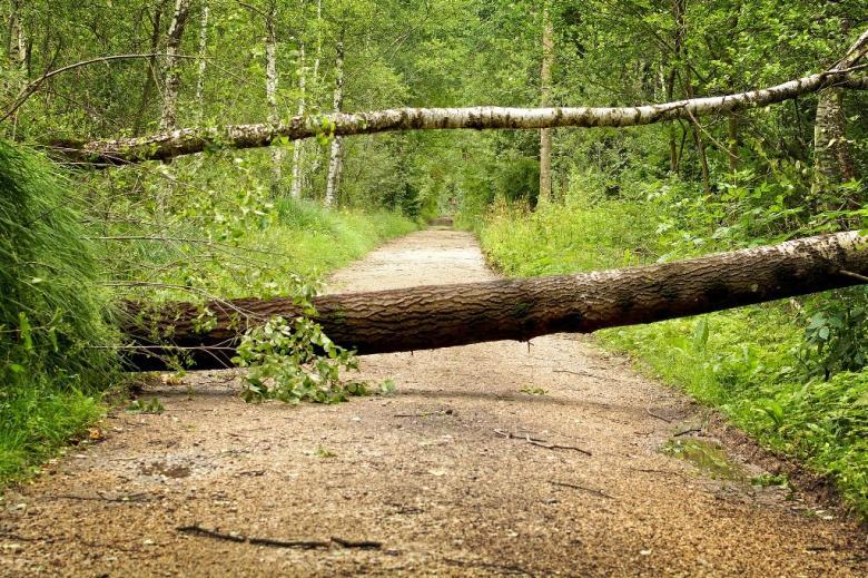 Zwalone drzewa blokują przejście