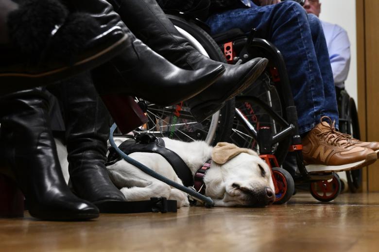 Śpiący pies asystujący, leży miedzy nogami i kołami wózków inwalidzkich
