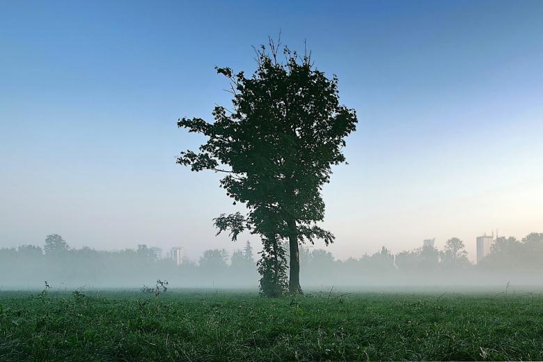 Krajobraz podmiejski, domy na horyzoncie, drzewo
