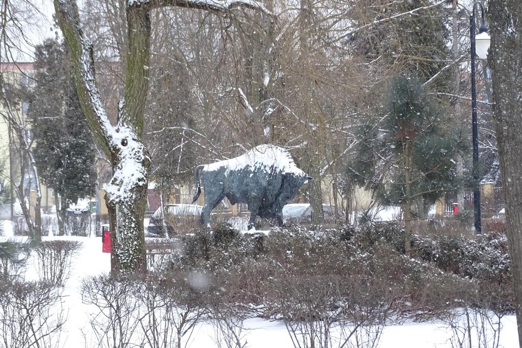 Pomnik żubra na skwerze, pada śnieg